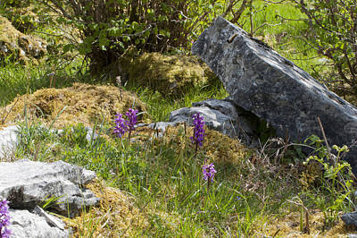 Photograph - Burren Orchids by Rob Hemphill