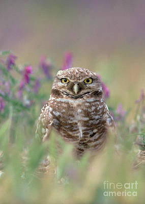 Burrowing Owl Art Print by Doug Herr