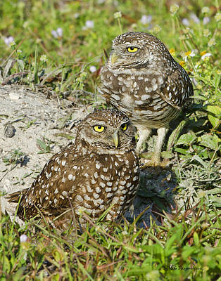Photograph - Burrowing Owls by Mike Fitzgerald