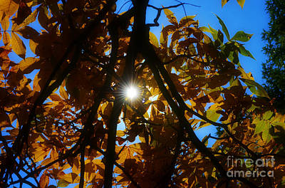 Autumn Peggy Franz Photograph - Burst Of Light Through Autumn Leaves by Peggy Franz