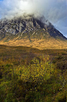Stob Dearg Photograph - Bush Below The Buckle by Gary Eason