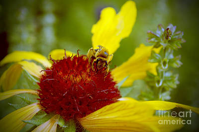 Photograph - Busy Bee by Anjanette Douglas