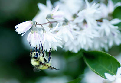 Photograph - Busy Bee by Dan McManus