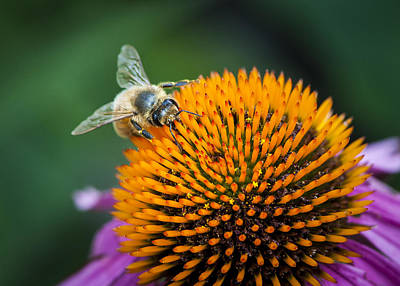 Photograph - Busy Bee by Jen Morrison