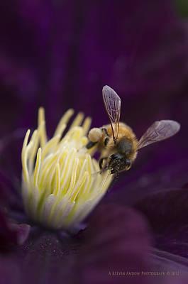 Busy Bee Art Print by Kelvin Andow