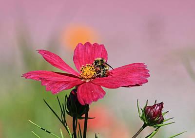 Busy Bee Art Print by Ronald Lafleur