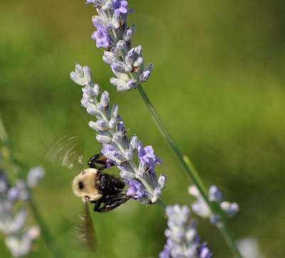 Busy Bee Art Print by Terri Albertson