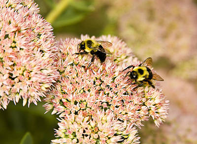 Photograph - Busy Bees by Trudy Wilkerson