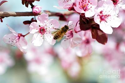 Busy Buzzing Around These Beautiful Blooms... Art Print