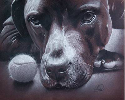 Chocolate Lab Drawing - But I Just Wanna Play by Albert Casson