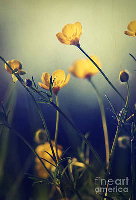 Photograph - Buttercup Flowers by Paul Topp
