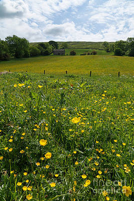 Buttercups In A Wildflower Meadow Art Print