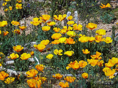 Photograph - Buttercups In The Desert by Methune Hively