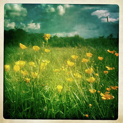 Buttercups Art Print by Neil Carey Photography