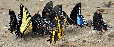 Butterfles And More Butterflies Art Print by Marty Koch