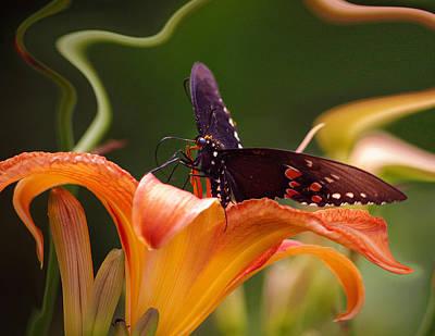 Butterflies Are Free... Print by Arthur Miller