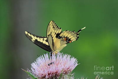 Art Print featuring the photograph Butterflies Are Free by Kathy  White