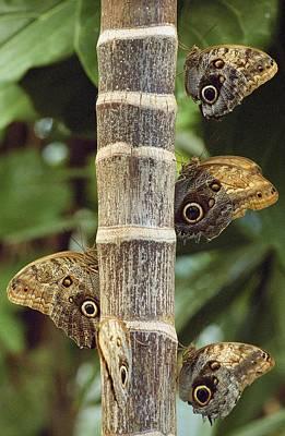 Butterflies Art Print by Bilderbuch