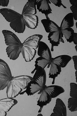 Photograph - Butterflies In Black And White by Rob Hans