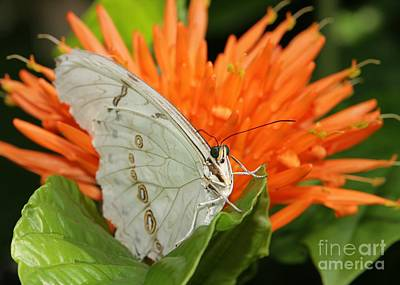 Butterflies Love Orange Flowers Art Print