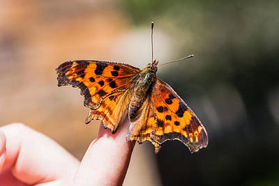 Photograph - Butterflow On Finger by Chris Fullmer
