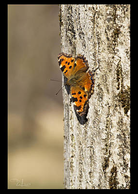 Photograph - Butterfly 01  Card by Raffaella Lunelli