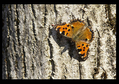 Photograph - Butterfly 02  Card by Raffaella Lunelli