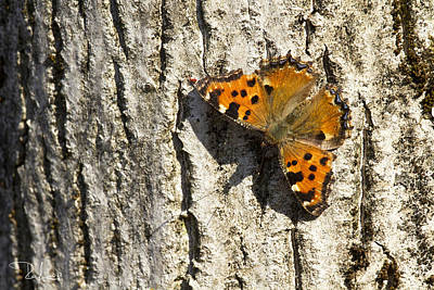 Photograph - Butterfly 02 by Raffaella Lunelli