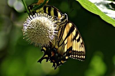 Butterfly 2 Art Print by Joe Faherty