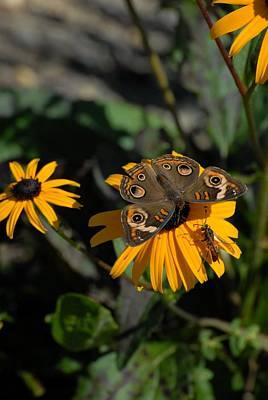Butterfly 90 Art Print by Joyce StJames