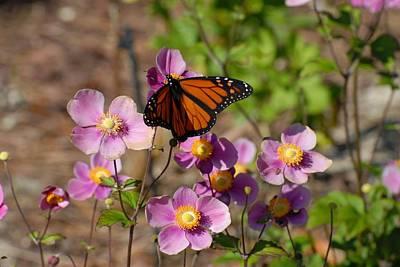 Butterfly 91 Art Print by Joyce StJames