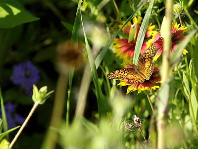 Photograph - Butterfly And Blankets II by James Granberry