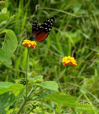Butterfly In Motion Photograph - Butterfly And Flowers by William Patterson
