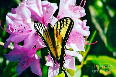 Butterfly And Rhododenren Art Print by Judy Via-Wolff