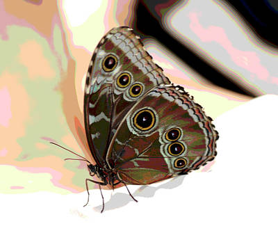 Designers Choice Photograph - Butterfly Art by Don Wright