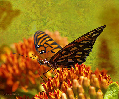 Digital Art - Butterfly At Ease by J Larry Walker