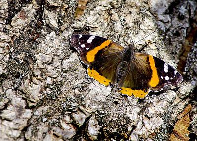 Photograph - Butterfly Bark by LeeAnn McLaneGoetz McLaneGoetzStudioLLCcom