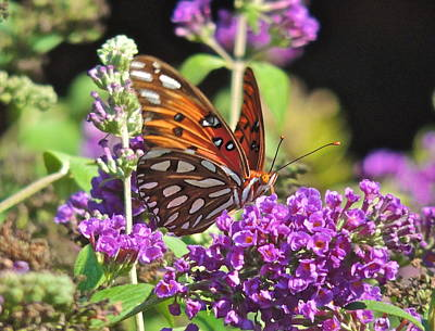 Photograph - Butterfly Beauty by Eve Spring