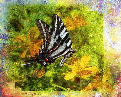 Photograph - Butterfly Beauty by J Larry Walker