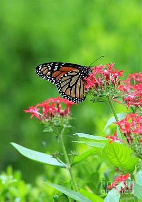 Art Print featuring the photograph Butterfly Beauty by Laurinda Bowling