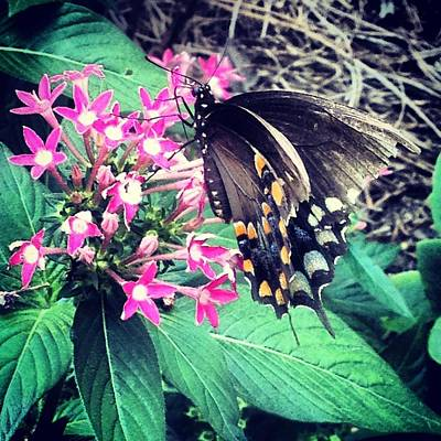 Photograph - Butterfly Beauty by Lora Mercado
