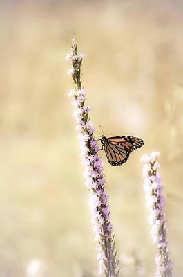 Butterfly Art Print by Bill Martin