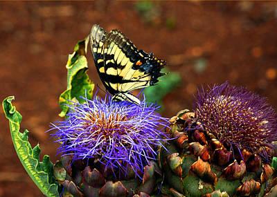 Photograph - Butterfly Blues by LeeAnn McLaneGoetz McLaneGoetzStudioLLCcom
