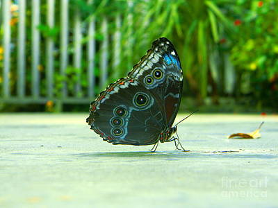 Photograph - Butterfly by Utopia Concepts