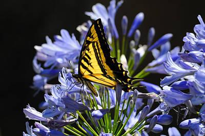 Butterfly Catcher Art Print by Lynn Bauer