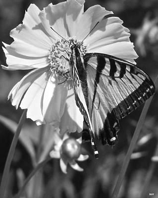 Butterfly Collection Black White Art Print by Debra     Vatalaro