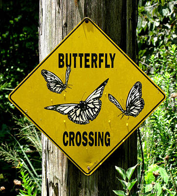 Photograph - Butterfly Crossing by Donna Brown
