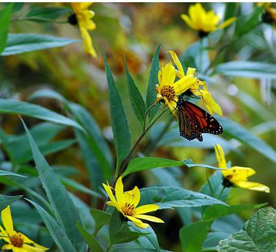 Photograph - Butterfly  Delight by LeeAnn McLaneGoetz McLaneGoetzStudioLLCcom