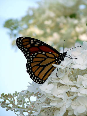 Butterfly Dreams II Art Print by Terry Eve Tanner