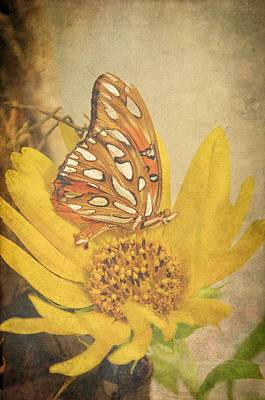Photograph - Butterfly Dreams by Jan Amiss Photography